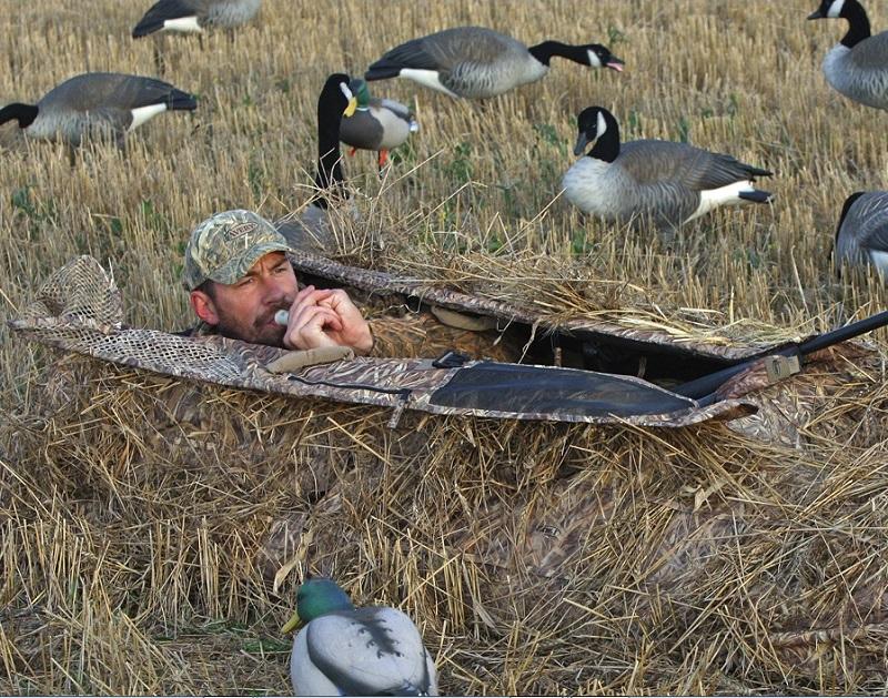 В Сибири под вопросом охота на гуся