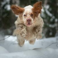 Зимние прогулки. Летучая собака.